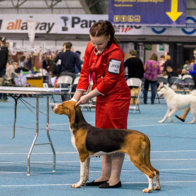 Emma ja Satumeren Moona Junior Handler -kilpailussa Tampere KV:ssä 6.5.2017 / Emma and Satumeren Moona at the Junior Handler competition at Tampere INT 6.5.2017