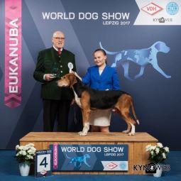 Satumeren Niko saavutti Veteraani Maailman Voittaja -17 tittelin ja oli BIS4-veteraani Maailman Voittaja näyttelyssä Leipzigissä 9.11.2017, tuomarina Karl Reisinger / Satumeren Niko won VWW-17 -title with BIS4-veteran placement at the World Dog Show in Leipzig 9.11.2017 under judge Karl Reisinger