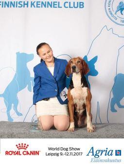 Satumeren Niko saavutti Veteraani Maailman Voittaja -17 tittelin ja oli BIS4-veteraani Maailman Voittaja näyttelyssä Leipzigissä 9.11.2017 / Satumeren Niko won VWW-17 -title with BIS4-veteran placement at the World Dog Show in Leipzig 9.11.2017